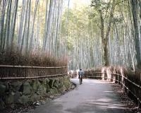 Arashiyama, JP 2012